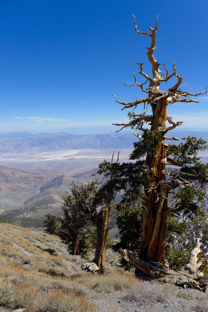 On the Way up Telescope Peak