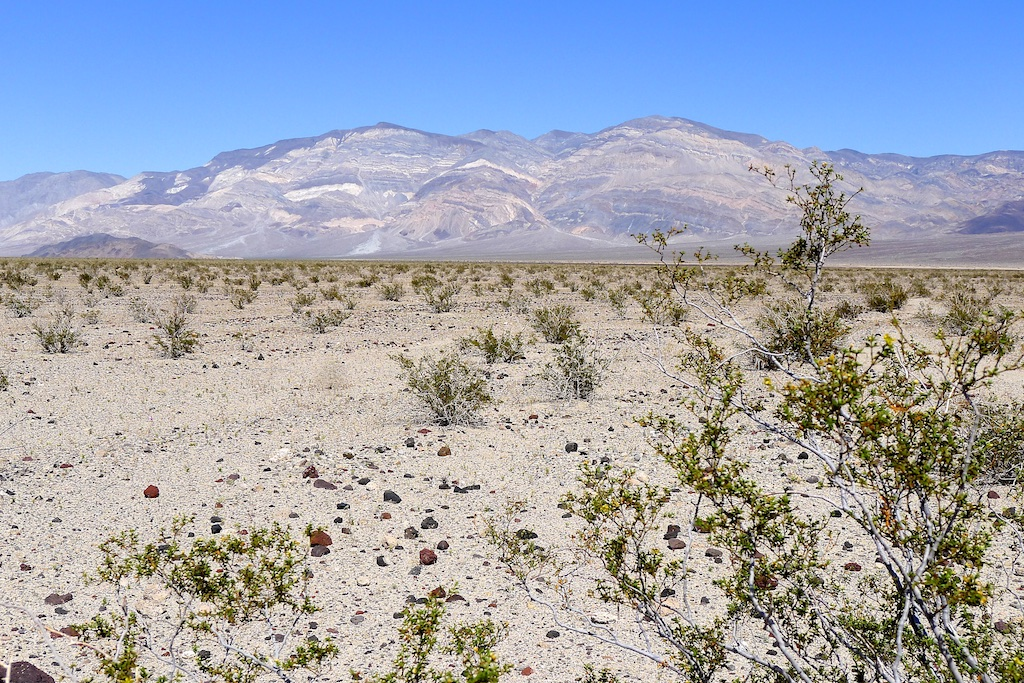 Creosote Bush and the Panamint Mountains