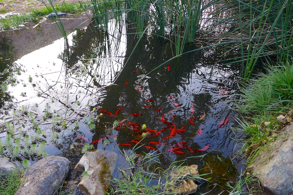 China Garden Fish Pond