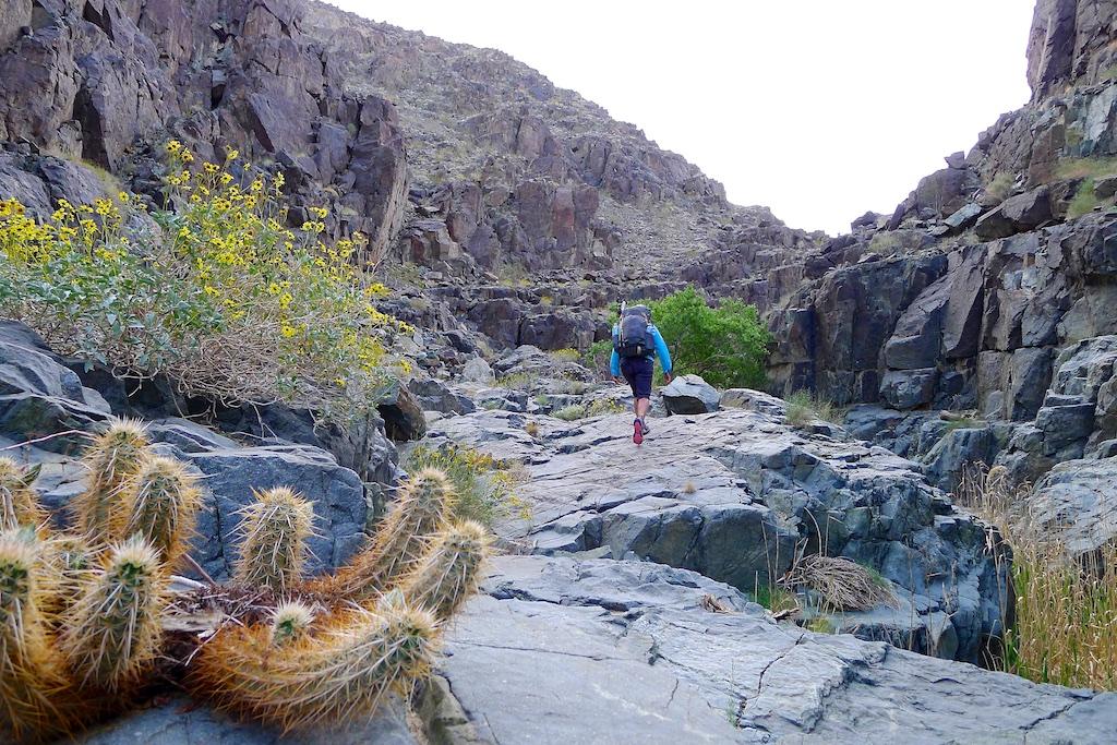 Upper Darwin Canyon